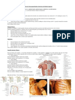 Sistema Muscular 5