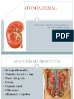 Anatomía Renal Anselma