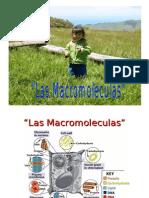 Las macromoleculas