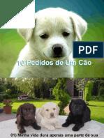 10_Pedidos_De_um_Cao