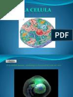 Diapositivas Célula 2