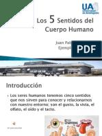 Ejemplo_1 Los 5 Sentidos Del Cuerpo Humano