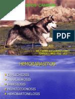 hemoparasitoscaninos-130319212123-phpapp02