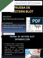 Western Blot Expos