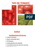 Tomate Diapositiva