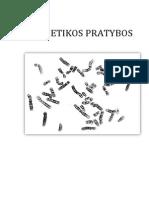 Genetikos pratybos 2013