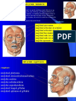 Muschii Mimicii