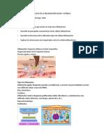 APUNTES DE CLASES DE CÉLULAS DE LA INFLAMACIÓN AGUDA Y CRÓNICA.pdf