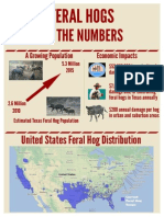 Feral Hogs By The Numbers in Texas