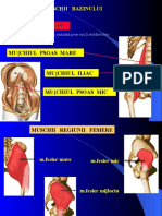 Muschii Bazinului