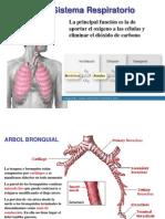 Respiracion y Salud