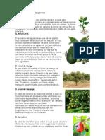 Tipos de Plantas Angiospermas