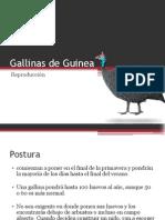 Gallinas de Guinea