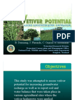 Potential of vetiver for groundwater recharge