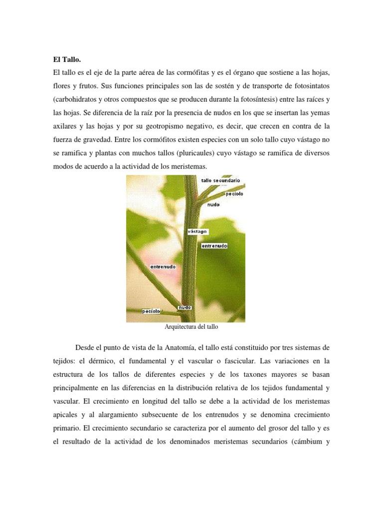 Excelente La Anatomía Del Tallo Cresta - Imágenes de Anatomía Humana ...