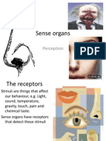 Chapter 11 Sense Organs