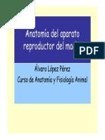 Anatomia de La Reproduccion en El Macho 2008