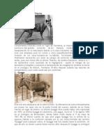 ANIMALES EXTINTOS.docx