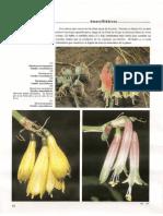 Patzelt Flora Del Ecuador-4-Tierra Fria-2