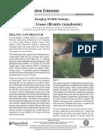 Virginia Cooperative Extension - Managing Wildlife Damage Canada Goose