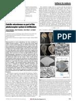 Aizenberg Calcitic Microlenses Brittlestars Nature 2001