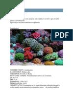Corales Para Novatos-2