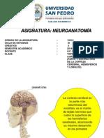 Clase 2 Topografía de La Corteza Cerebral (Parte 1)