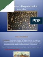 Clasificación y Filogenia de Los Animales