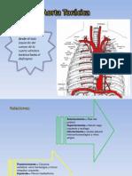 Aorta Torácica y Abdomial