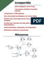 08_Microsporidia