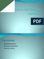 ppt Estructura del sistema nervioso.pptx
