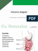 Clase n1 Instestino Delgado Ciencias 5b Semana12 2014