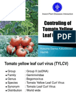 Pengendalian Tomato Yellow Leaf Curl Virus (TYLCV)