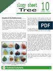 ROCKROSE ECOTOURISM-Ethnobiology Sheet 10-Figtree
