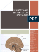 hipotalamo expo.pptx