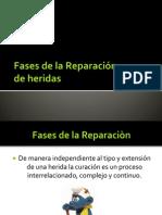 Fases de La Reparación