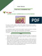 Control de Plagas Organicos