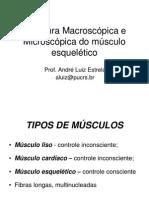 2 Neuromuscular - Arquitetura Muscular