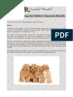 Poodles - Among the Globe's Smartest Breeds