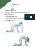 Exercitii Pentru Durerile Dorsale
