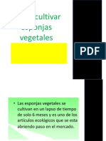 Como Cultivar Esponjas Vegetales