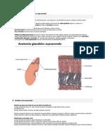 Anatomia Şi Fiziologia Glandelor Suprarenale
