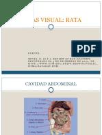 Atlas Visual