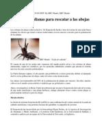 Arañas Al Rescate de Abejas. Desarrollan Biopesticida