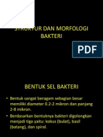 2_struktur-morfologi.pptx
