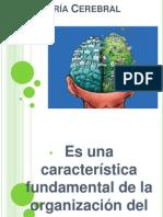 Asimetría Cerebral2