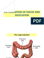 formation of faeces and defecation