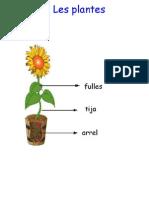 les plantes 5è català