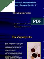 1 Zygomycetes