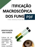Aula 3 Identifi Macro Fungos